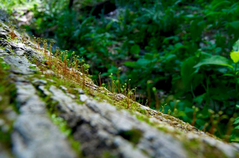 Earth Day, lichen, moss, environment