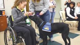 mc-inspire-health-canine-collaboration--001